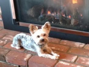 cooper on the fireplace promotional