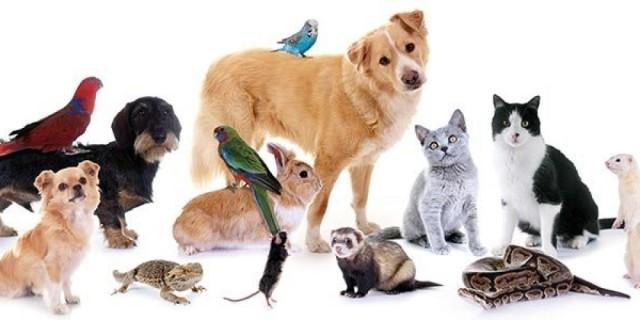 pet blessing animals Oct 2019